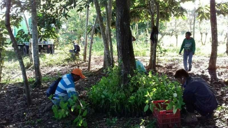 reforestando6