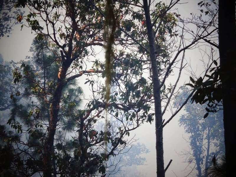 incendio forestal1